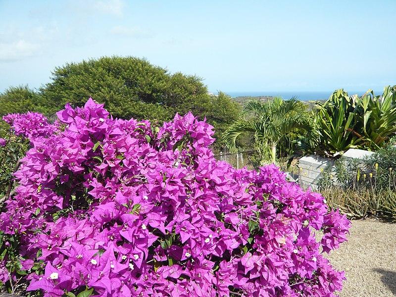 File:Flowers - panoramio - georama (2).jpg