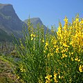 Flowers and mountain at Groote Constantia (36684177441).jpg
