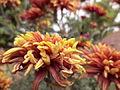 Flowersgoldenbrown nesh creations.JPG