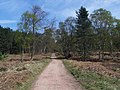 Footpath, Cannock Chase - geograph.org.uk - 406122.jpg
