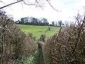 Footpath between high hedges - geograph.org.uk - 1764011.jpg