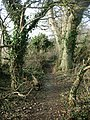 Footpath through the trees - geograph.org.uk - 1116484.jpg