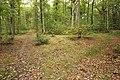 Forêt Départementale de Méridon à Chevreuse le 29 septembre 2017 - 08.jpg