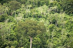 Forest, Santa Criz Dept, Bolivia.jpg