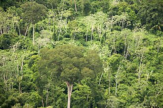 Santa Cruz Department (Bolivia) - Aerial photo of forest, Santa Cruz Department, 2009.