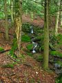 Forest-Mountain-Stream ForestWander.JPG