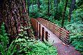 Forest Footbridge (Linn County, Oregon scenic images) (linnDA0099).jpg