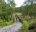 Forest track near the Scallastle River - geograph.org.uk - 456255.jpg