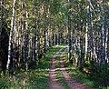 Forest trail in Põhja-Kõrvemaa, 2011-09.jpg
