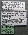 Formica microgyna casent0104885 label 1.jpg