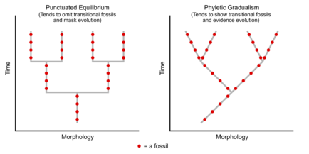 Fossils in Evolutionary Biology.png