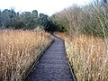 Fowlmere boardwalk - geograph.org.uk - 648985.jpg