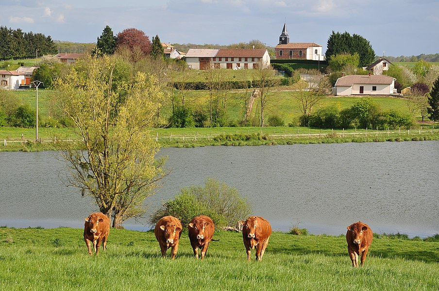 View of Ante, one of the two villages in the municipality Sivry-Ante (Marne department, Champagne-Ardenne region, France). Seen from Road D65.