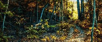 Franklin Creek State Natural Area - Franklin Creek State Park, October 2013