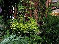 Front garden - Flickr - peganum (23).jpg