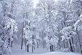 Frozen trees in Valia Calda.jpg