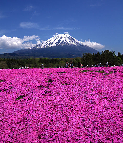 File:Fuji Shibazakura Festival 2.jpg