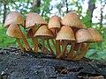 Fungi (26748490534).jpg