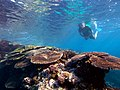 GBR-snorkeling-chris-brown.jpg