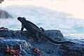 Galápagos wildlife.jpg
