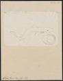 Galeus canis - 1700-1880 - Print - Iconographia Zoologica - Special Collections University of Amsterdam - UBA01 IZ14100045.tif