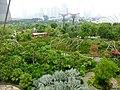 Garden 2014 - panoramio.jpg