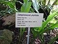 Gardenology.org-IMG 0803 rbgs10dec.jpg