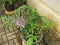 Gardenology.org-IMG 7607 qsbg11mar.jpg
