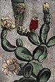 Gautier D'Agoty; Collection des plantes usuelles... Wellcome L0023738.jpg