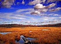 GboroSP Wetland.jpg