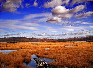 Gouldsboro State Park - Image: Gboro SP Wetland