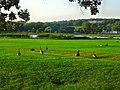 Geese in Warner Park - panoramio (16).jpg