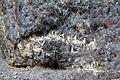 Gesteine am Ufer der Urft im Nationalpark Eifel-3527.jpg