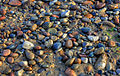 Gfp-pebbles-on-the-ground.jpg