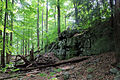 Gfp-pennsylvania-promised-land-state-park-rock.jpg