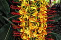 Ginger Lily (6904565516).jpg