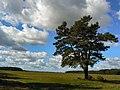 Gmina Narew, Poland - panoramio (19).jpg