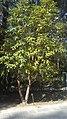 Godawari Botanical garden 13.jpg
