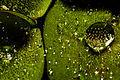 Gostas do Botânico.jpg