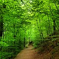 Grüne Zuflucht.jpg
