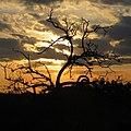 Grandes Rios - State of Paraná, Brazil - panoramio (20).jpg