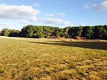 Hindmarsh Island-Geography-Grassland & Forest, Hindmarsh Island