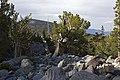 Great Basin 02.jpg