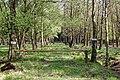Großenaspe Waldweg nahe Halloher Moor.jpg