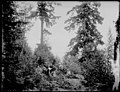 Group of people at Denny-Blaine Land Park Addition, including Mr Elbert Blaine, Summer 1900 (SEATTLE 4603).jpg