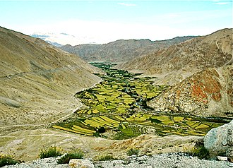 Leh - A view of agriculture around Leh.
