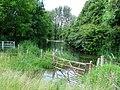 Growing Thames emerging Ewen grove - geograph.org.uk - 872124.jpg