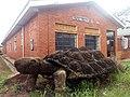 Gulu Mental Health Unit Tortoise Monument.jpg