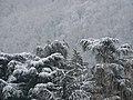 Héron cendré sous la neige.jpg