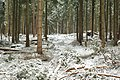 Hövelhofer Wald - Sturmschäden - 5.jpg